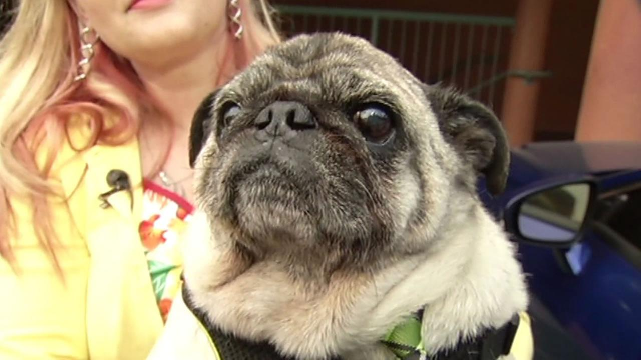 A San Francisco family is asking the public for help after their 13-year-old pugs wheelchair was stolen.