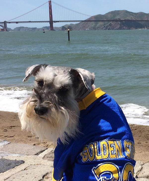 <div class='meta'><div class='origin-logo' data-origin='none'></div><span class='caption-text' data-credit=''>Golden State Warriors fans sent in their pics using #DubsOn7 or #abc7now to cheer on the Dubs during their 2016-2017 season.</span></div>