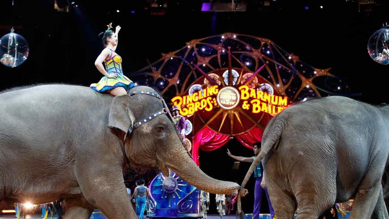 In this March 19, 2015, file photo, elephants walk during a performance of the Ringling Bros. and Barnum and Bailey Circus, in Washington. (AP Photo/Alex Brandon)
