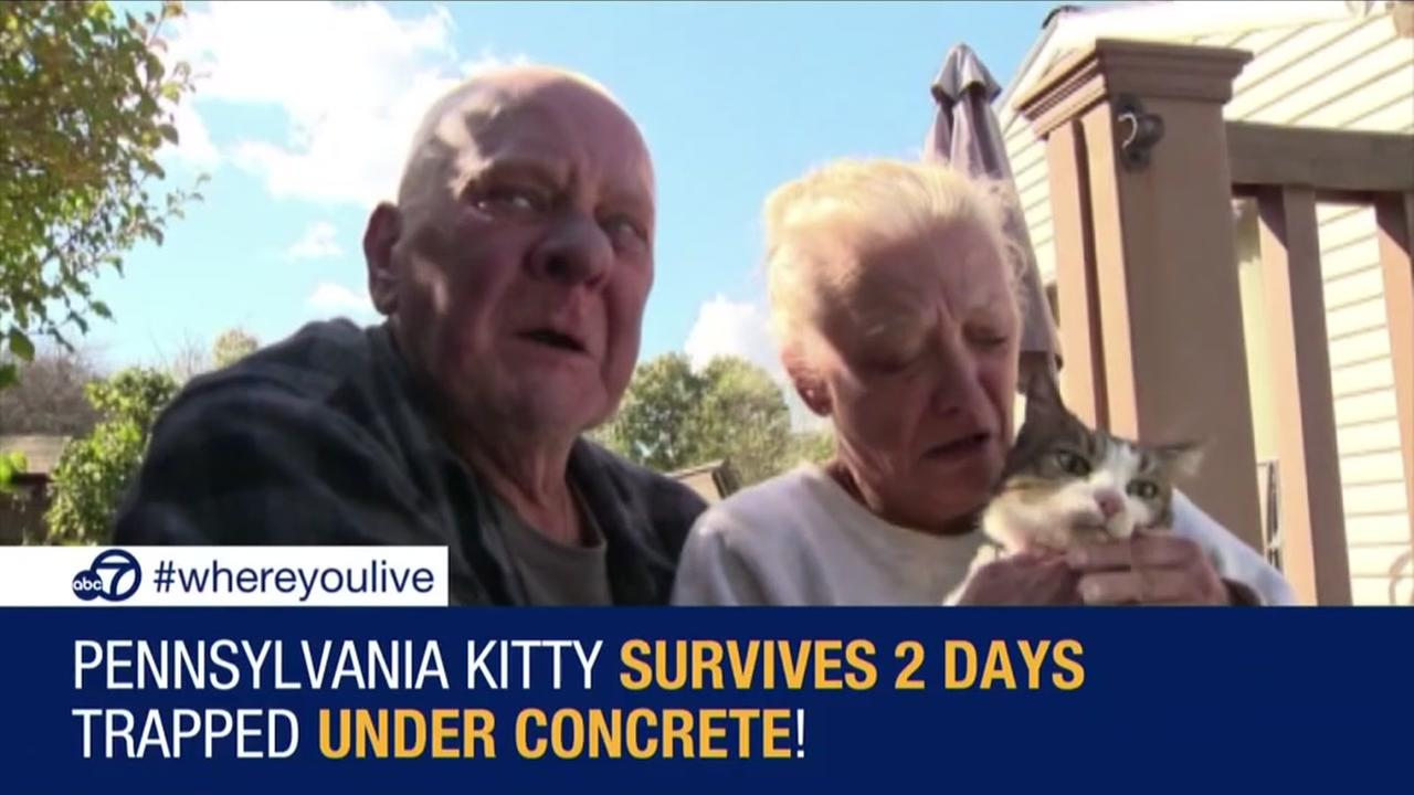 Kitty survives 2 days trapped under concrete