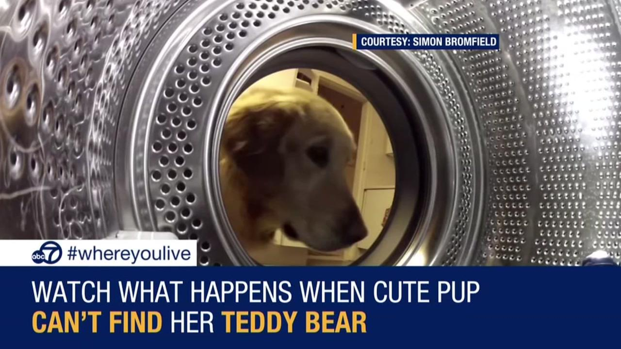 Dog rescues beloved teddy bear from washing machine