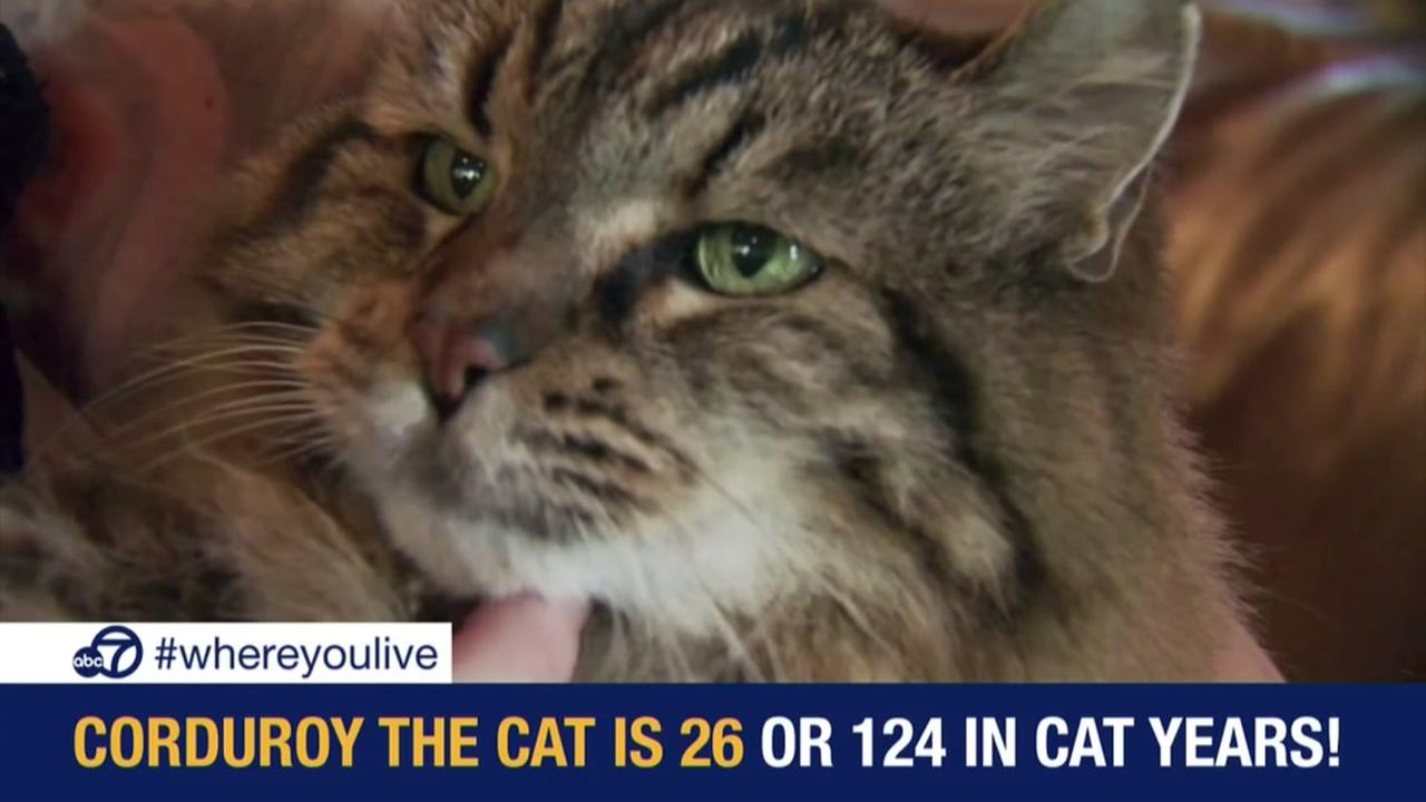 Know and Tell: Meet the world?s oldest living kitty