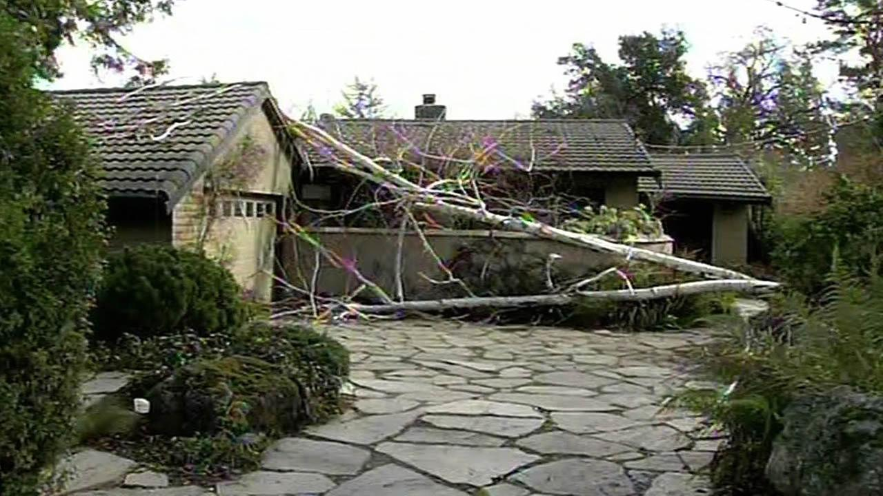 tree falls in front of house