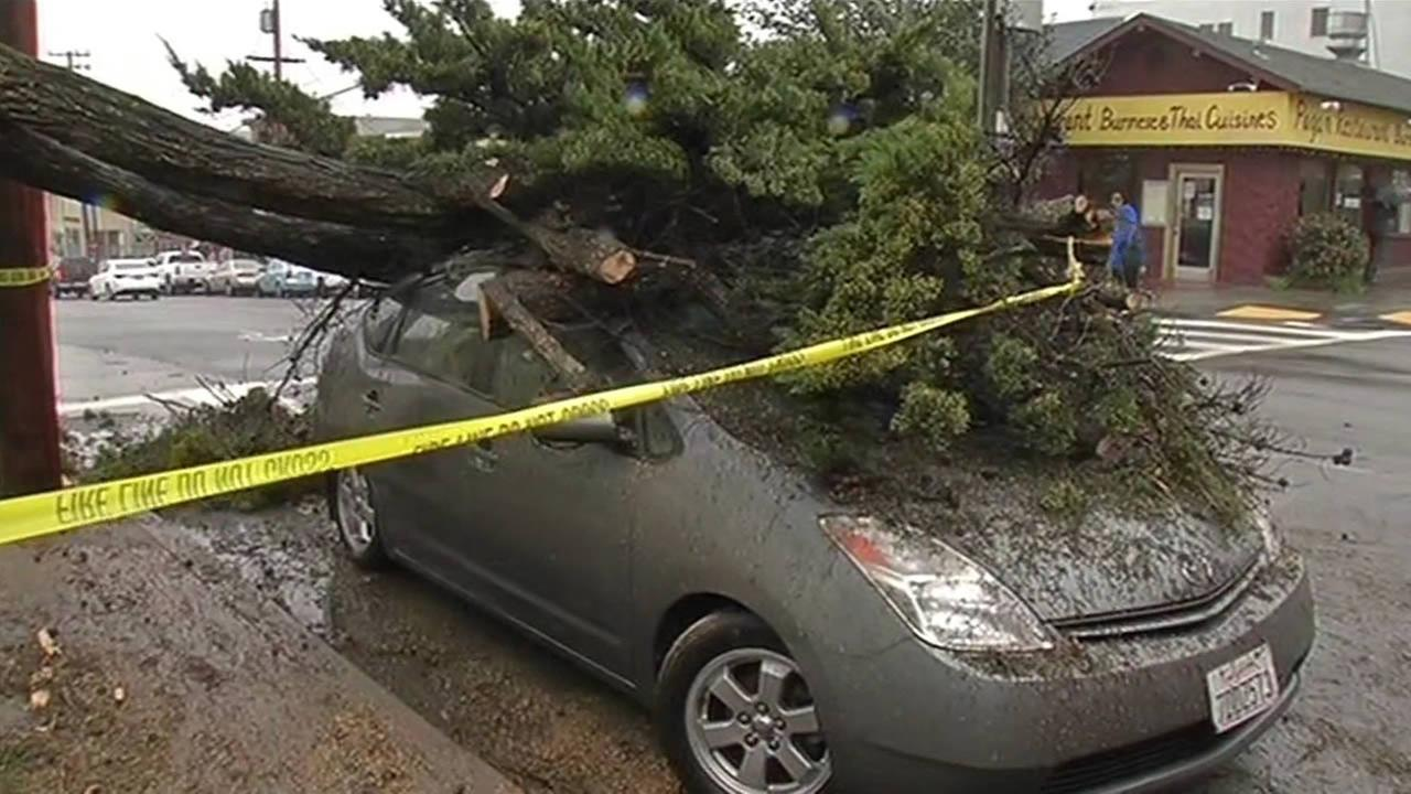 Strong winds toppled a tree on Clement Street and 33rd Avenue in San Francisco, Calif. on Sunday, March 13, 2016.
