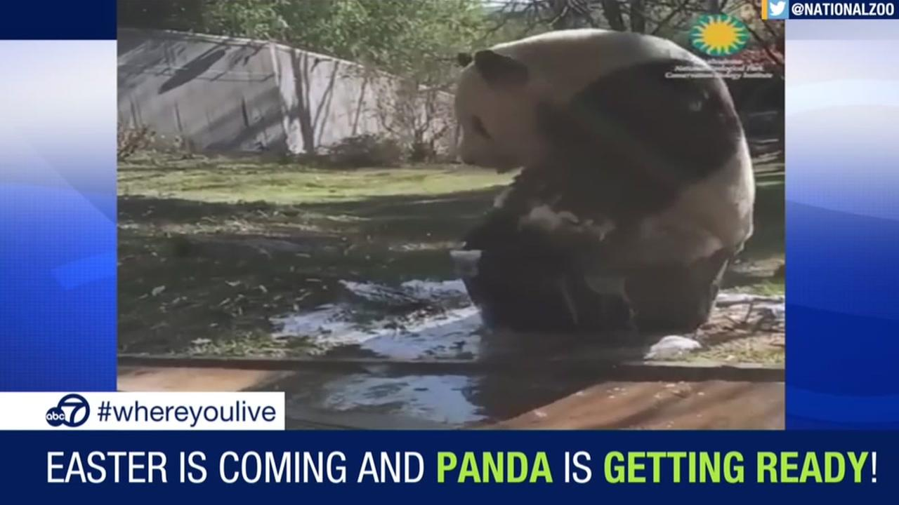 KNOW and TELL: Giant panda takes a bubble bath