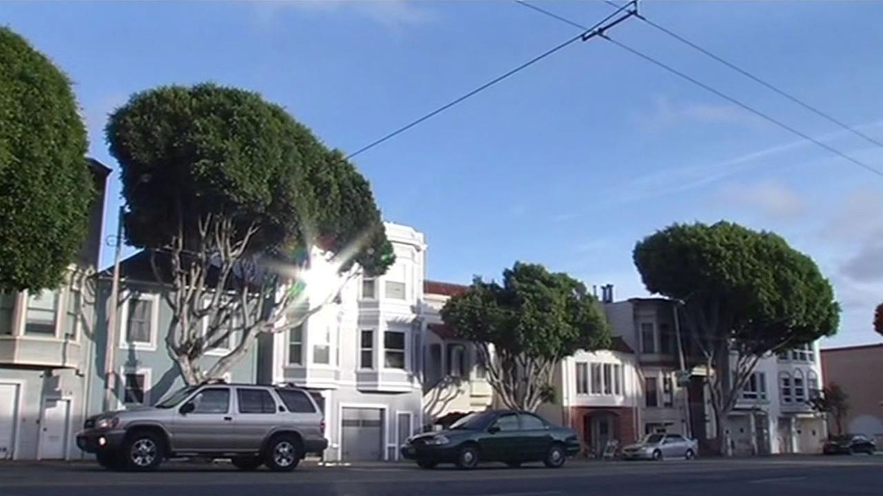 This image shows trees in San Francisco, Calif.