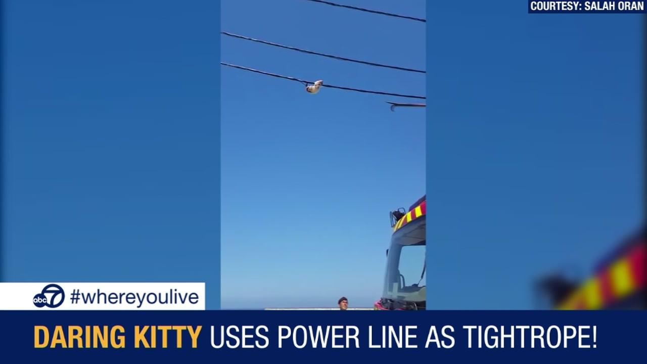 KNOW AND TELL: Kitty uses power line as tightrope!