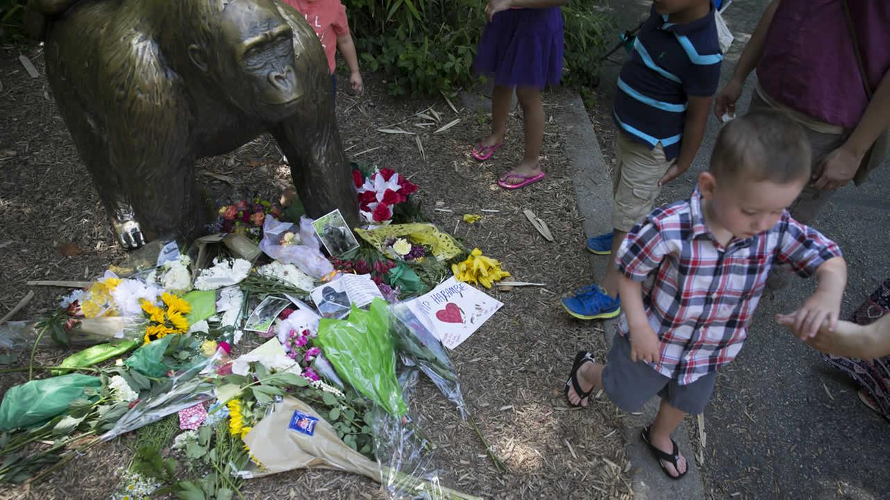 A boy is led away after putting flowers beside a statue of a gorilla outside the shuttered Gorilla World exhibit at the Cincinnati Zoo and Botanical Garden, Monday, May 30, 2016, in Cincinnati.