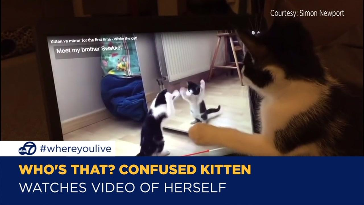 confused kitty