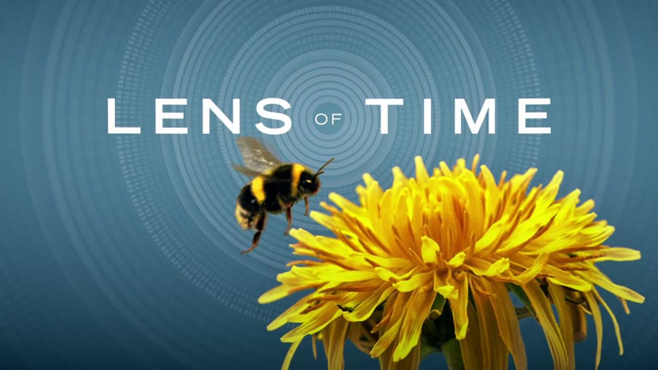 See how scientists use high-speed videography to investigate and learn from the clumsy flight of the bumblebee.