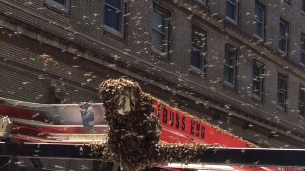 Thousands of bees swarmed a truck on Geary Street in San Francisco, Calif. on Thursday, July 21, 2016.