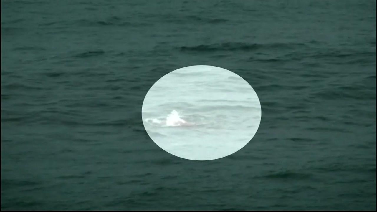 This image shows a shark sighting in Pacifica, Calif.