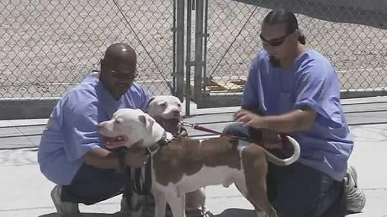 California State Prison in Lancaster took in animal evacuees after the Sand Fire.