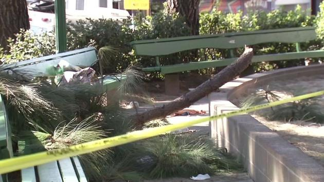 Tree branch falls on woman in SF park causing sever injuries