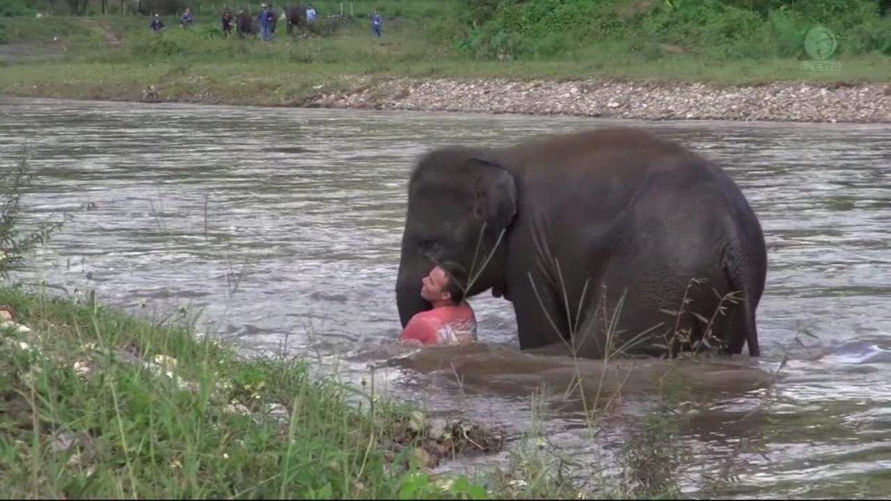 An elephant in Thailand is seen rescuing a man pretending to drown in this undated image.