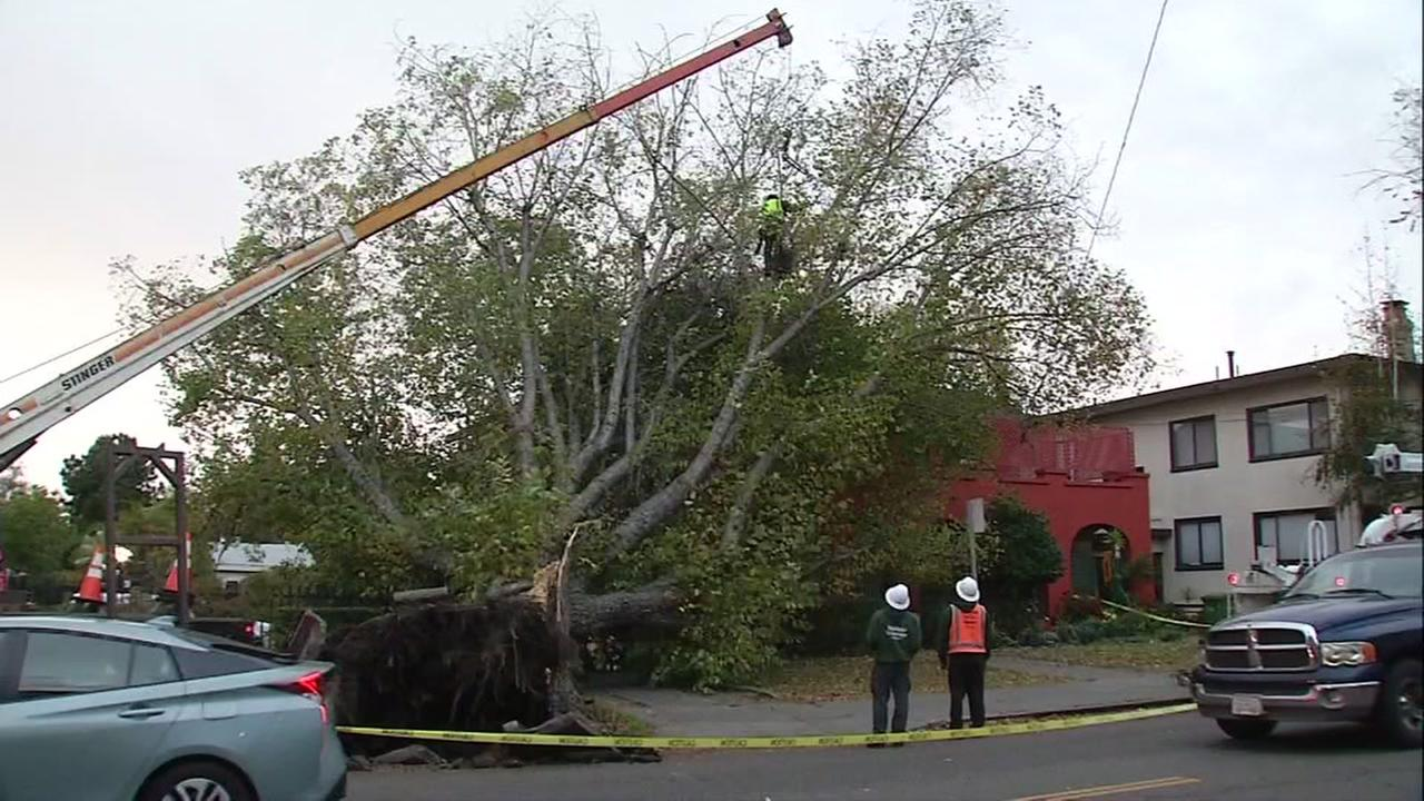 A large tree is seen after it fell onto an apartment on College Avenue in Berkeley, Calif. on Monday, October 24, 2016.