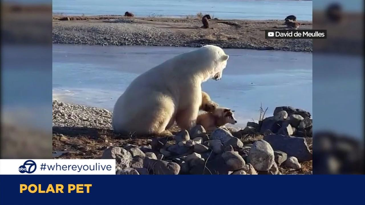 KNOW AND TELL: Polar bear and dog have unusual friendship