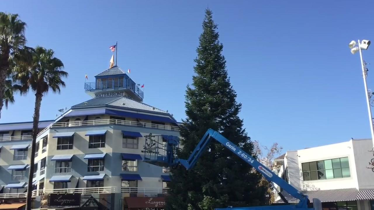 Oakland raises official Christmas tree in Jack London Square