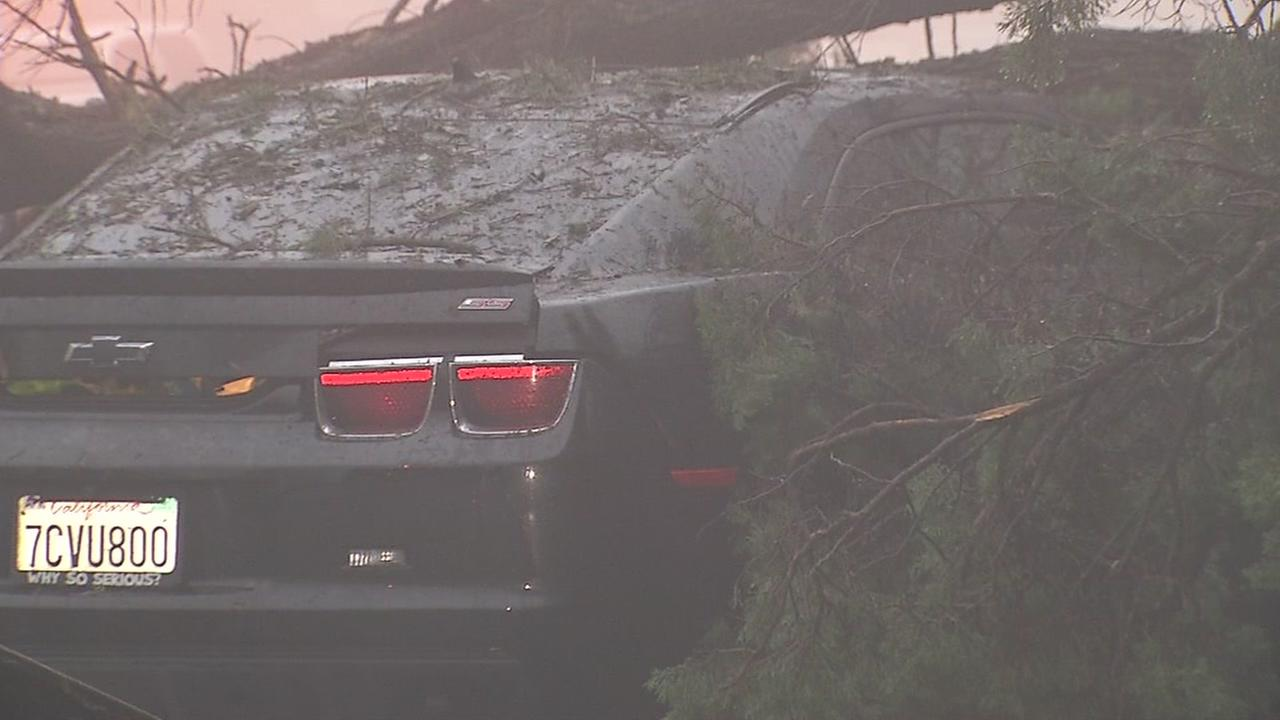 A 200-foot-tall tree fell on top of a car on Highway 13 in Oakland, Calif. on Saturday, December 11, 2016.