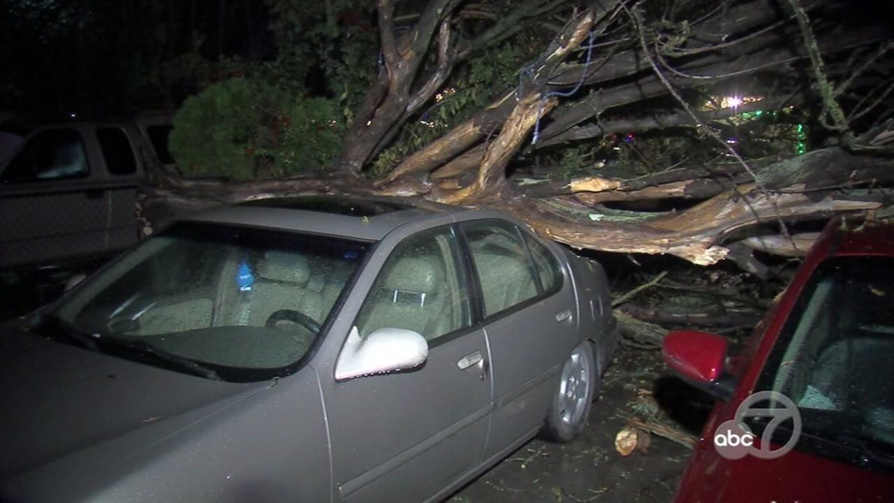 A tree crashed into two cars on Beech Street and Pulgas Avenue in East Palo Alto, Calif. on Thursday, Dec. 15, 2016.