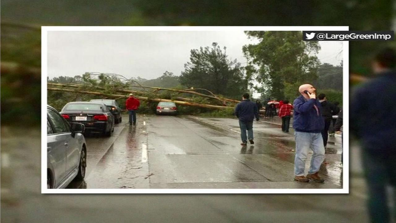 A tree is seen sprawled in the middle of Interstate 280 in San Bruno after it fell during a storm on Jan. 8, 2017.
