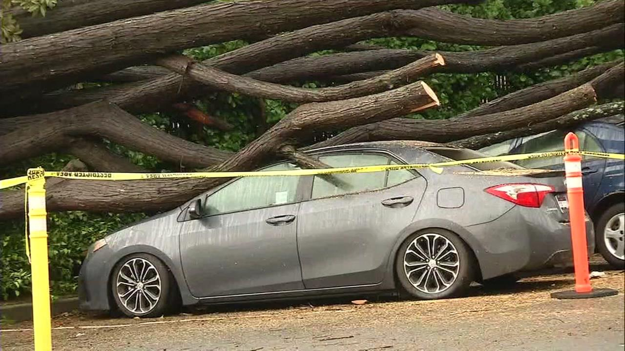 Toppled trees on top of car in San Francisco