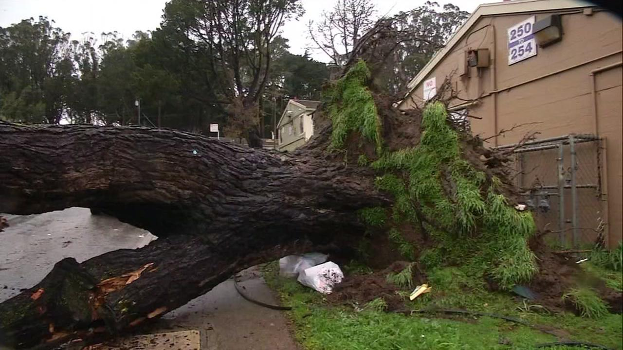 A tree crashed down during a storm near San Franciscos Visitacion Valley neighborhood on Tuesday, January 10, 2017.