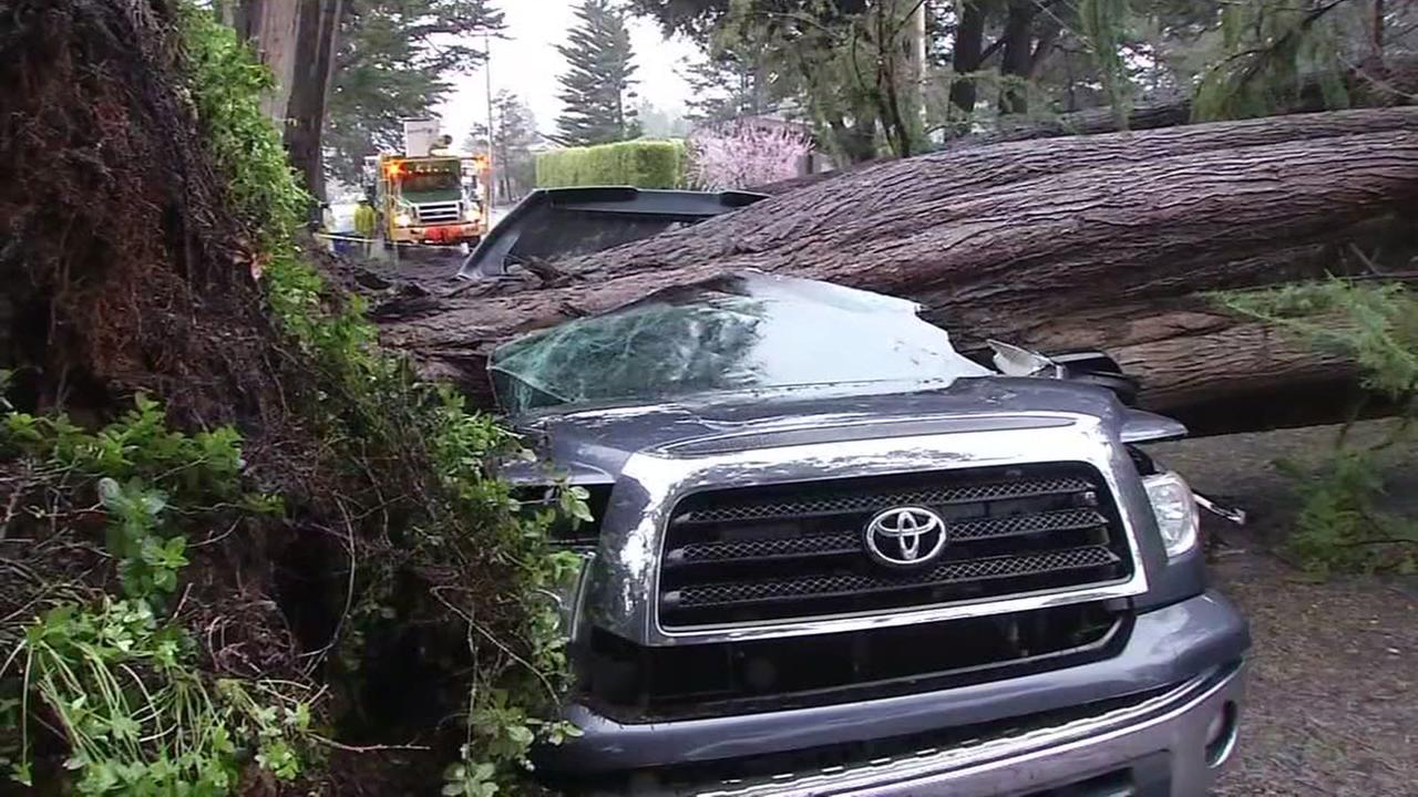 A truck crushed by a tree is seen on Friday February 17, 2017.