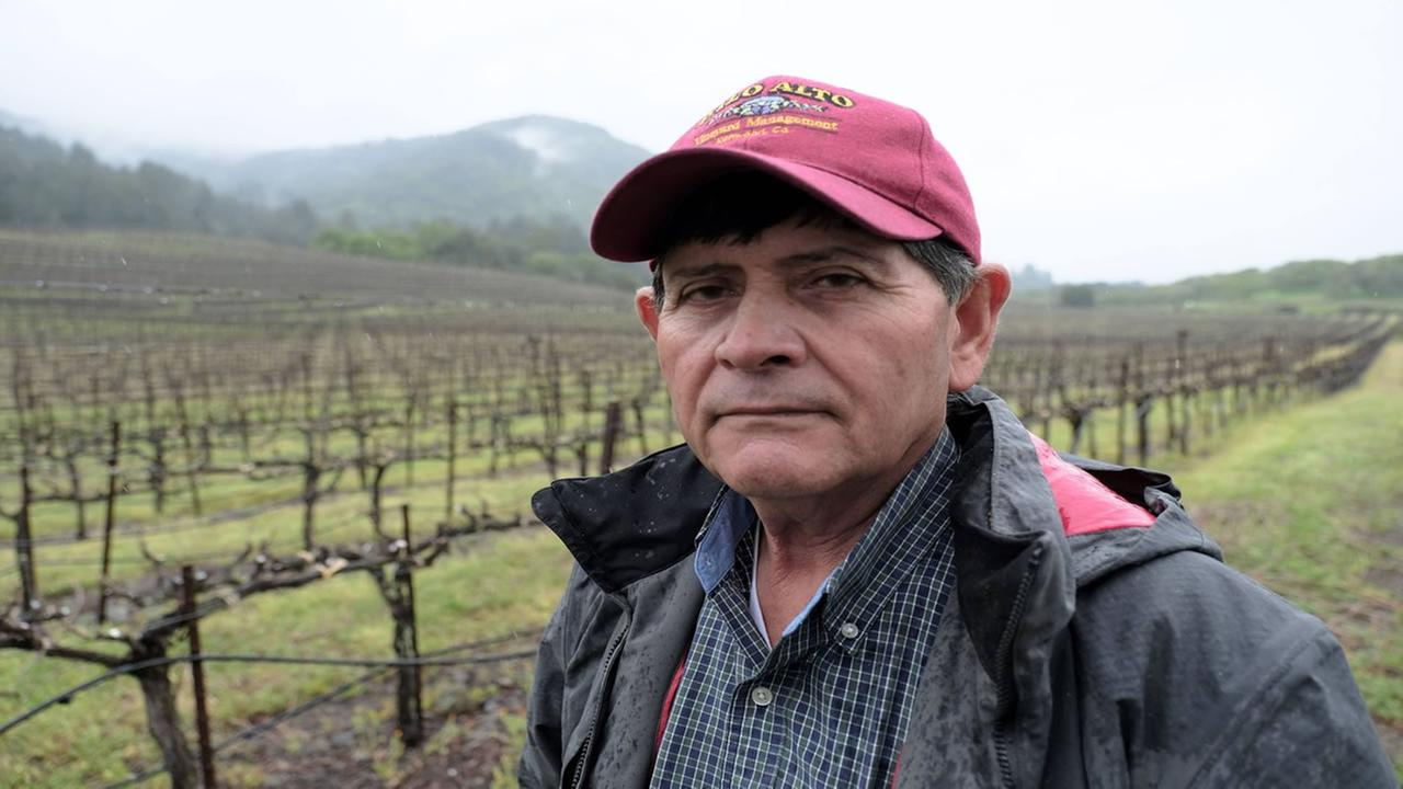 Chuy Ordaz appears on his vineyard in St. Helena, Calif. on March, 20, 2017.