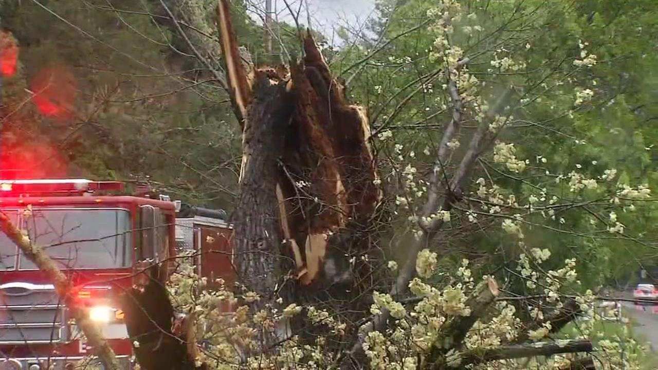 A tree branch is shown down in Larkspur, Calif. during high winds on April 6, 2017.