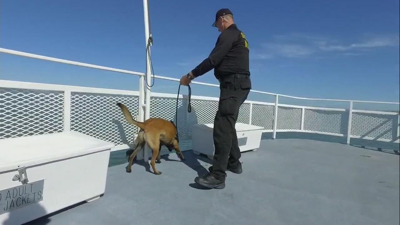 TSA trains dogs on detecting explosive at Berkeley Marina