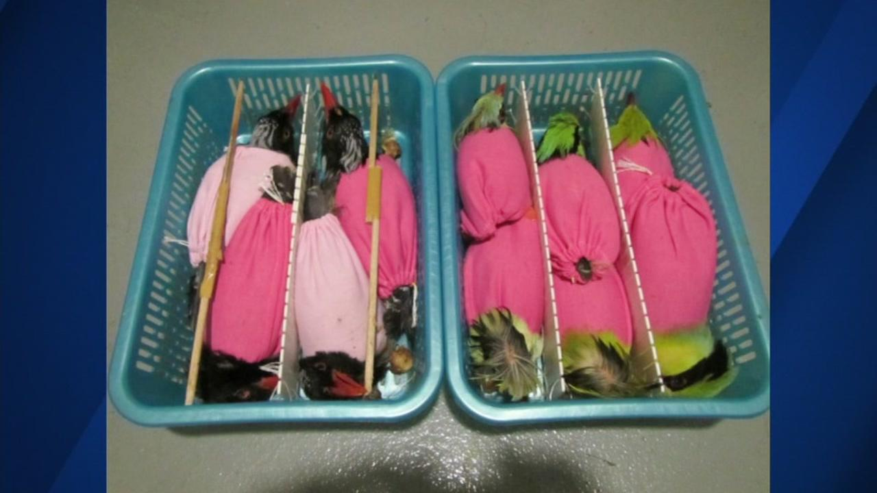 Man arrested for smuggling Songbirds into U.S. from Vietnam in suitcase