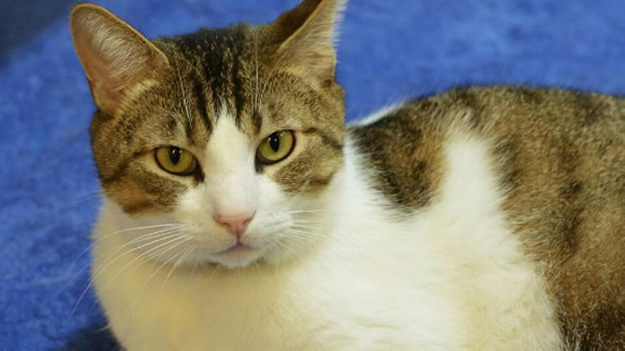This weeks Perfect Pet is named Alyx. This adorable cat is available for adoption through Marin Humane in Novato, Calif.