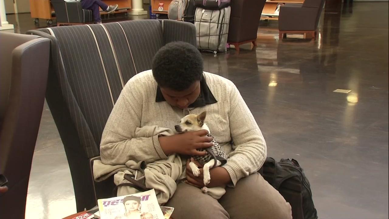 Milpitas library acts as a cooling center for animals