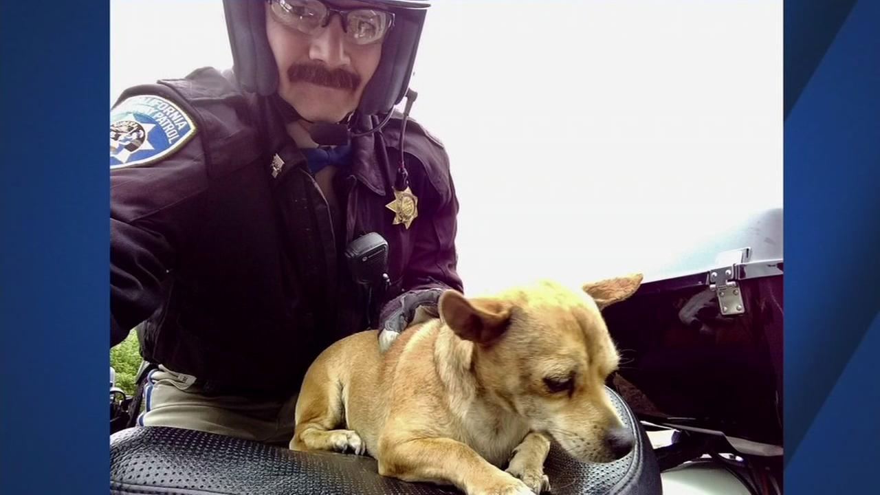 A CHP sergeant is seen with a dog he rescued in this undated image.