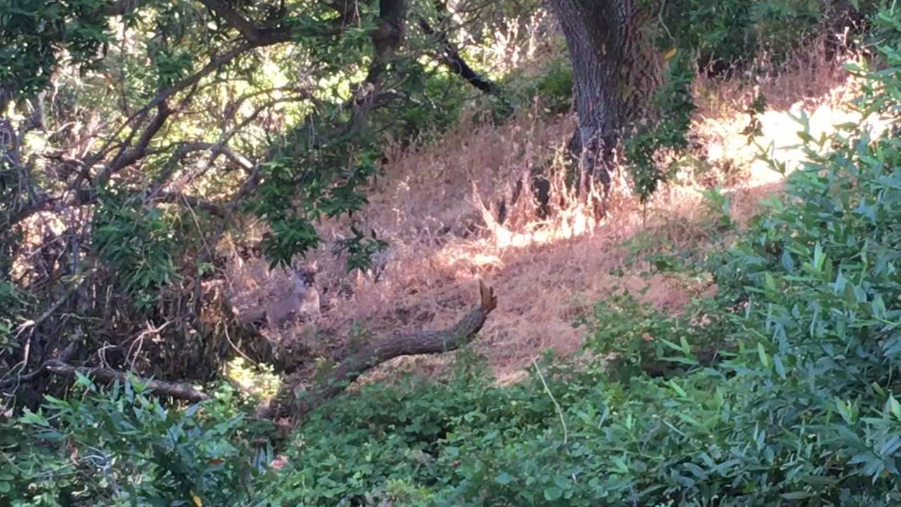 Alum Rock Park trails closed after Mountain Lion sighting