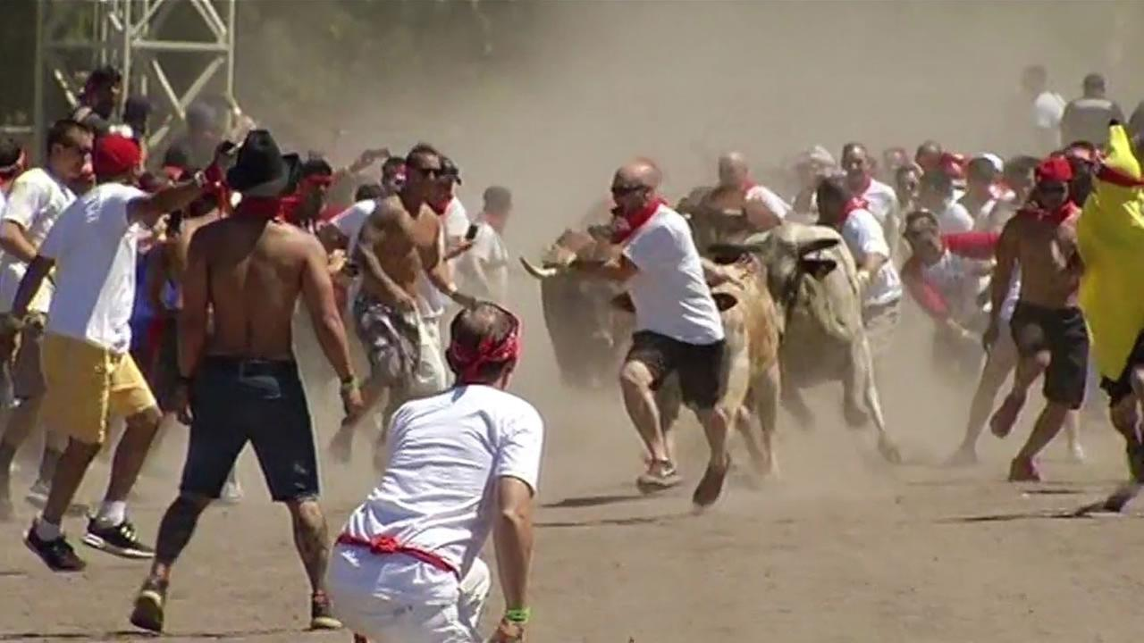 A huge crowd turned out to see the running of the bulls in Alameda County Saturday, but not all of them were happy to see the event make its debut.