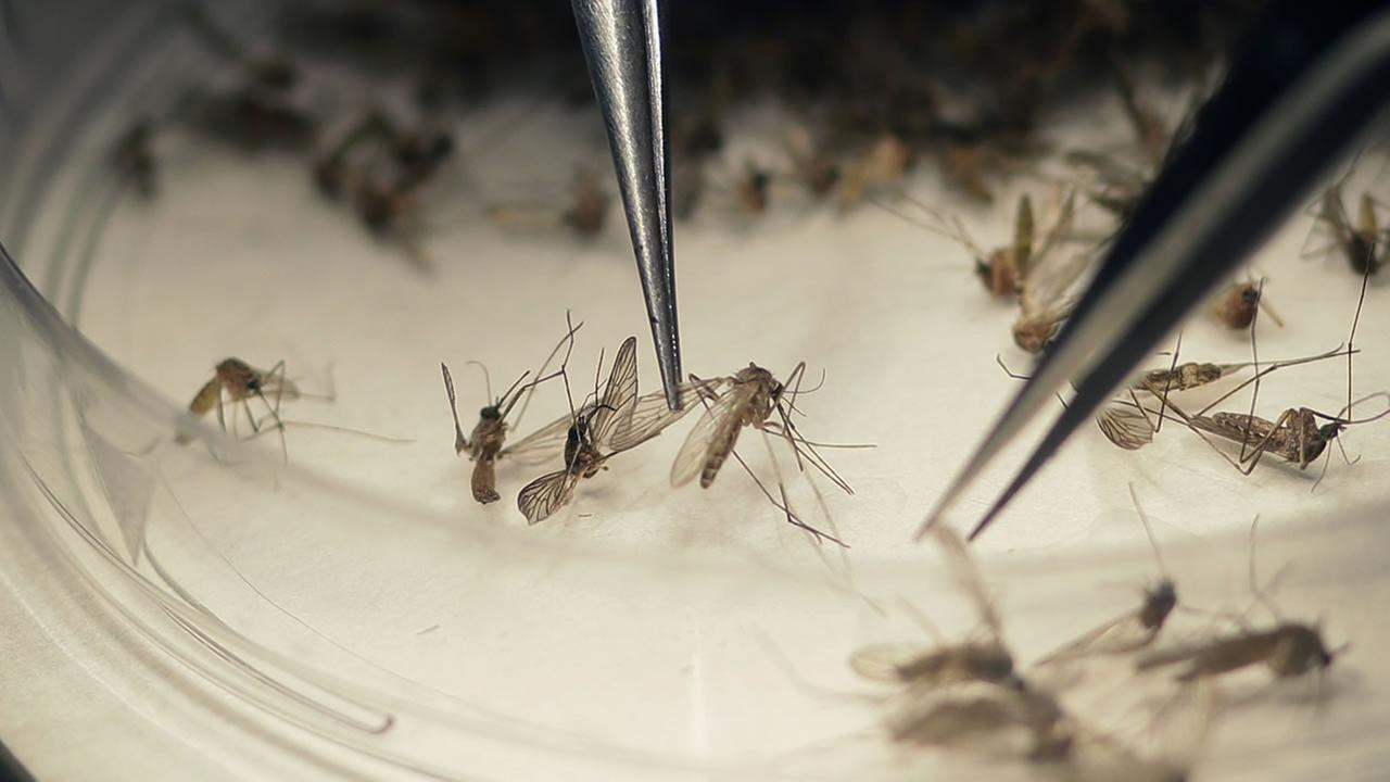 Mosquitoes are tested in a Texas facility on Feb. 11, 2016.