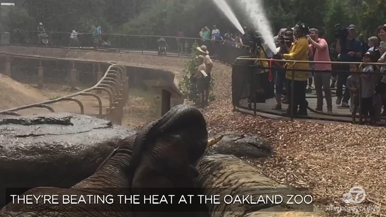 VIDEO: These elephants love being sprayed with fire hoses