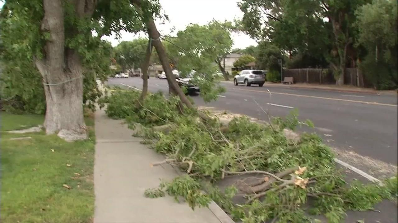 A tree toppled during a wind storm in San Jose, Calif. on Monday, September 11, 2017.