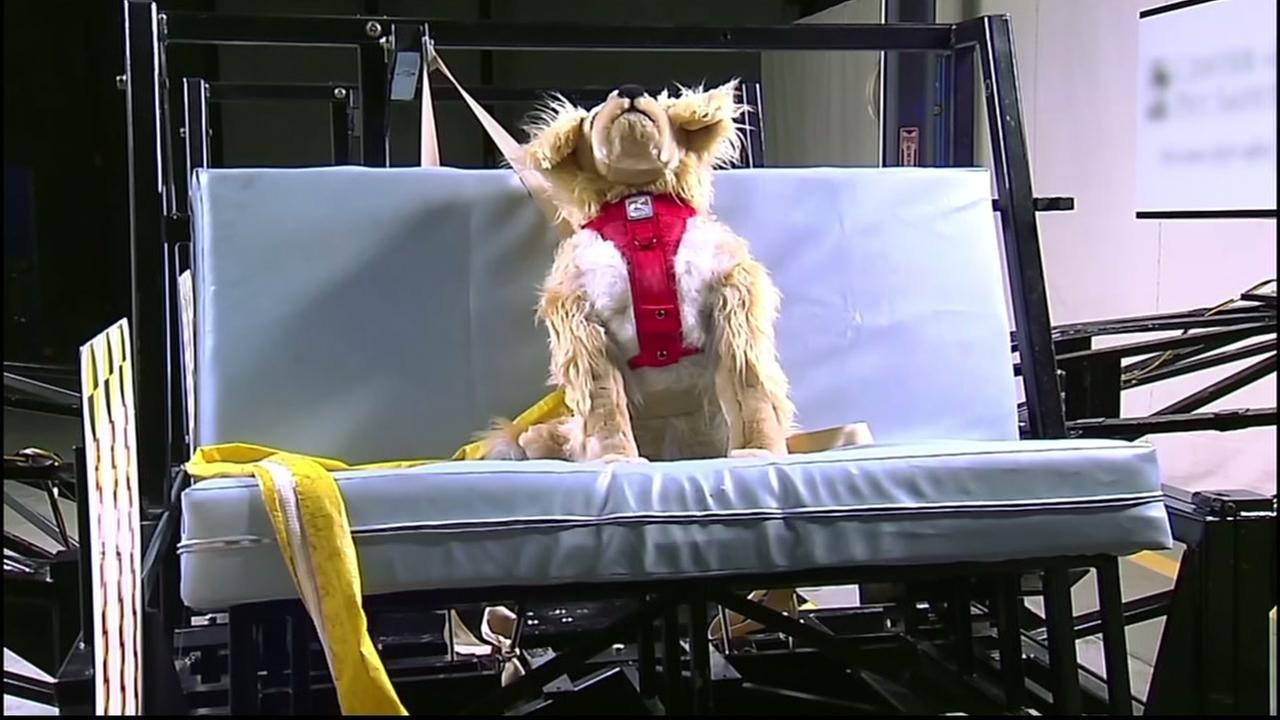 A crash test dog is seen in this undated image.