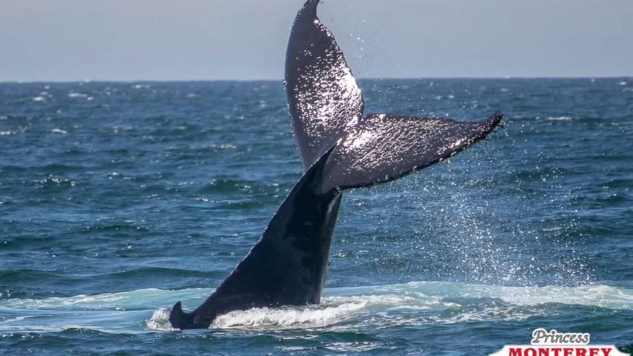 PHOTOS: Incredible images show whale fluking in Monterey