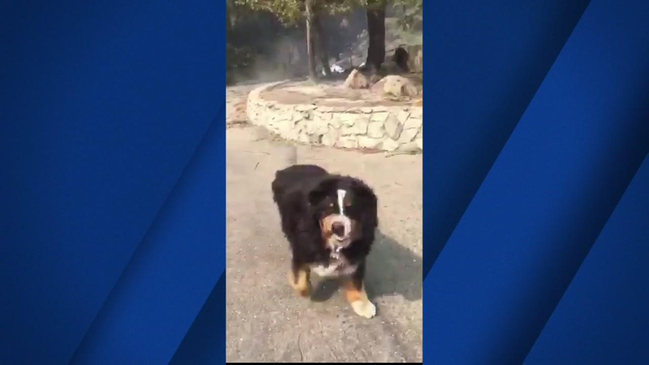 Santa Rosa resident find missing dog after long search through fire debris