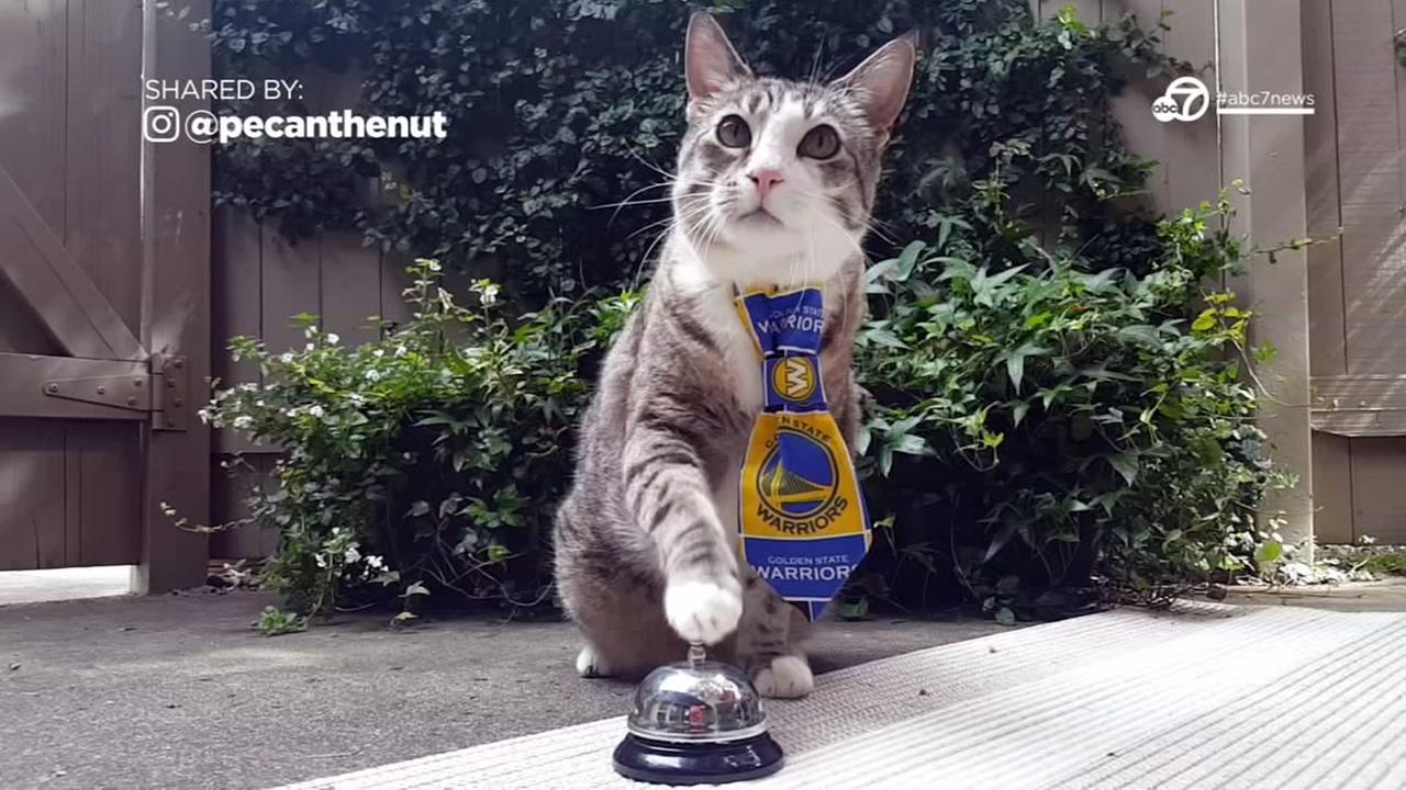 This handsome cat loves the Warriors