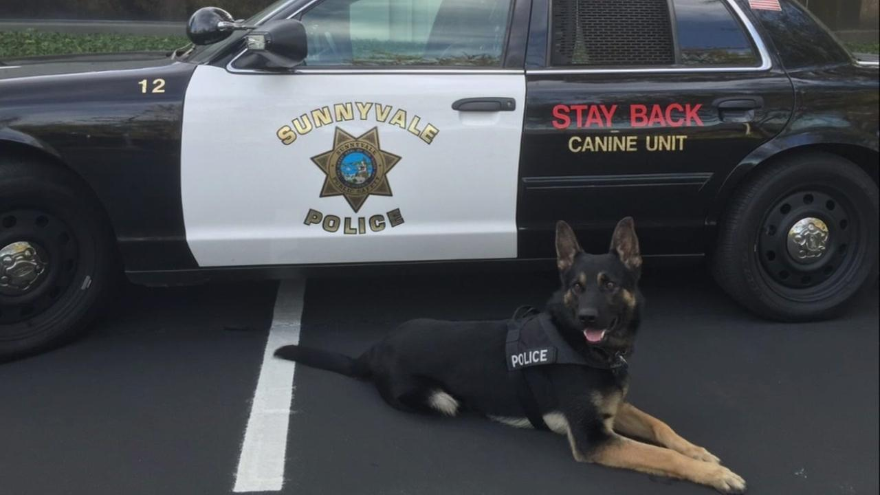 Sunnyvale K-9 officer Jax is seen in this undated image.