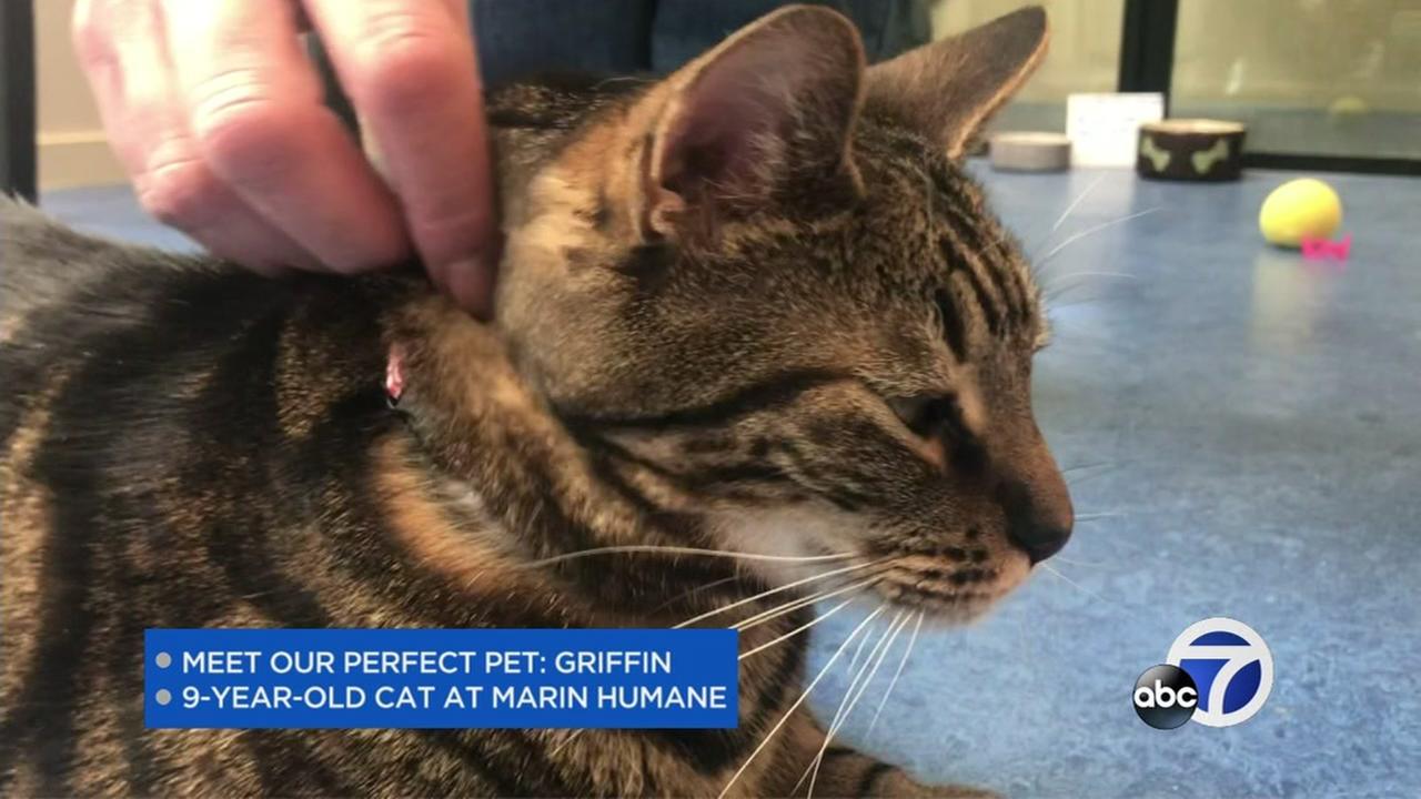 Meet this weeks Perfect Pet