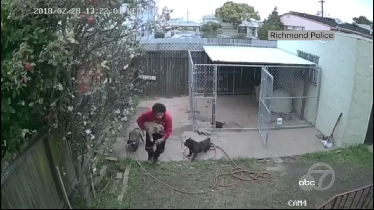 A man is seen on surveillance video stealing a dog in Richmond, Calif.