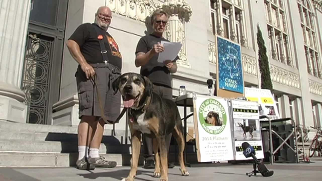 A group of occupy activists announced Thursday their plan for Einstein the dogs candidacy.