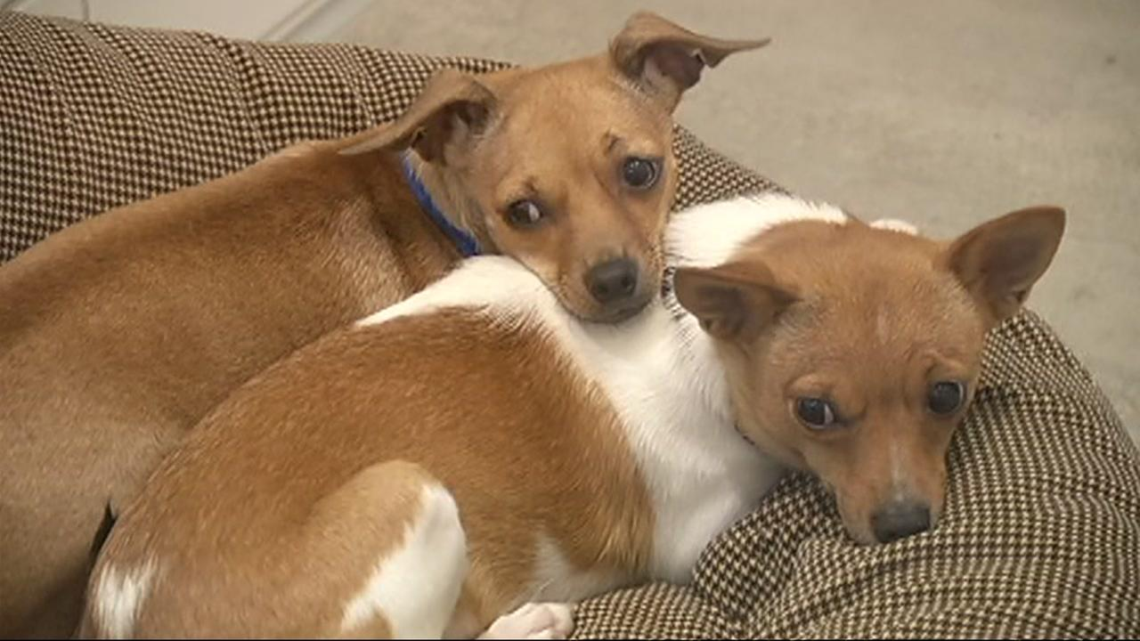 Two dogs are seen on National Adopt A Shelter Pet Day on Monday, April 30, 2018.