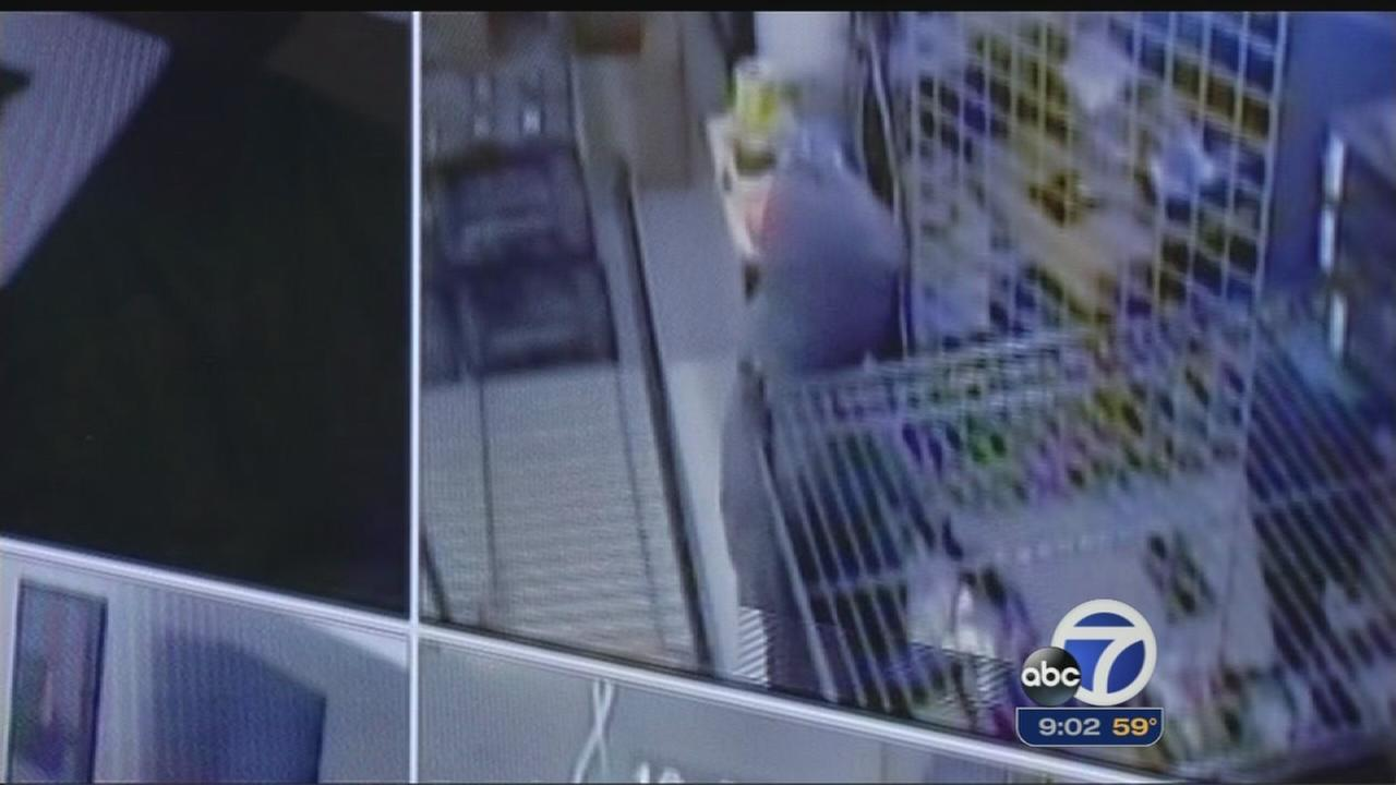 Surveillance video captures suspects stealing high-end equipment